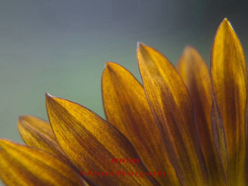 Sunflower Photography by Sarah McTernen